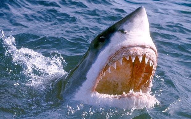 Man-eating shark seen in Suffolk river