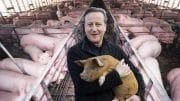 David Cameron on his new Suffolk pig farm