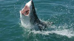 Felixstowe shark attack