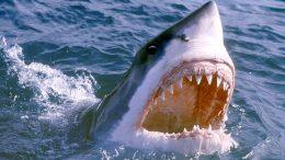 Suffolk shark
