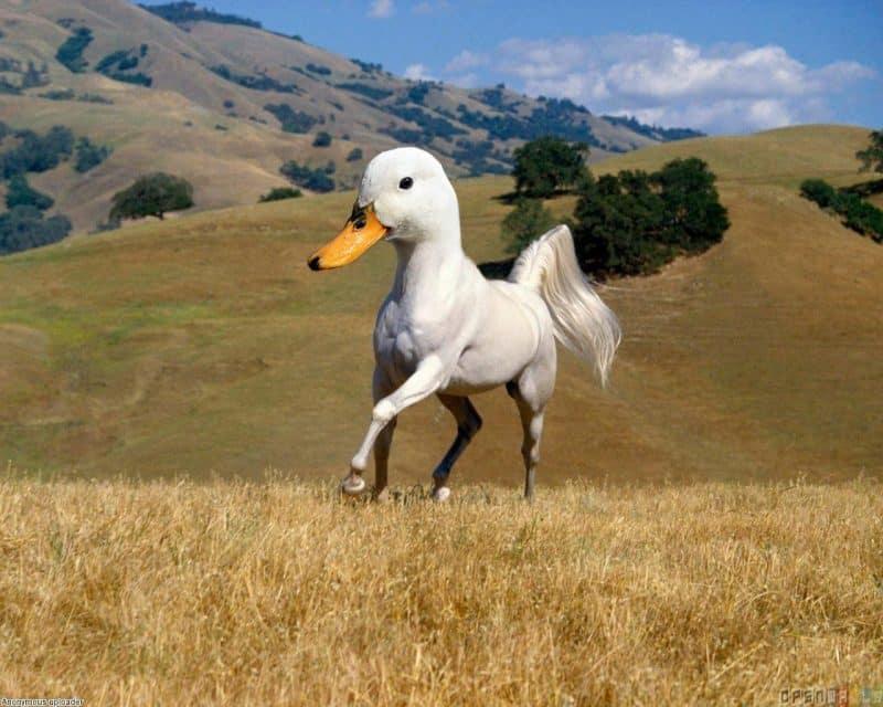 Norfolk scientists duck horse