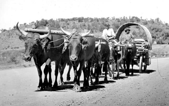 Ox wagon Norfolk