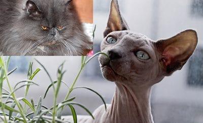 Sizewell cat