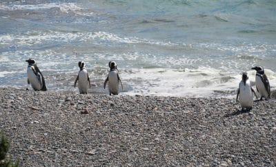 Penguins in Felixstowe