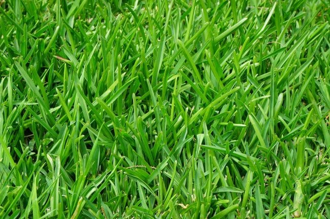 You won't have to mow the lawn