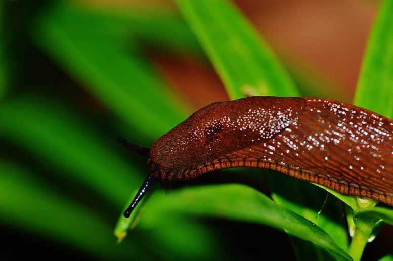 English slugs