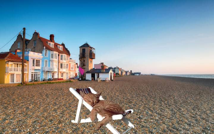 Cat nap on Aldeburgh beach