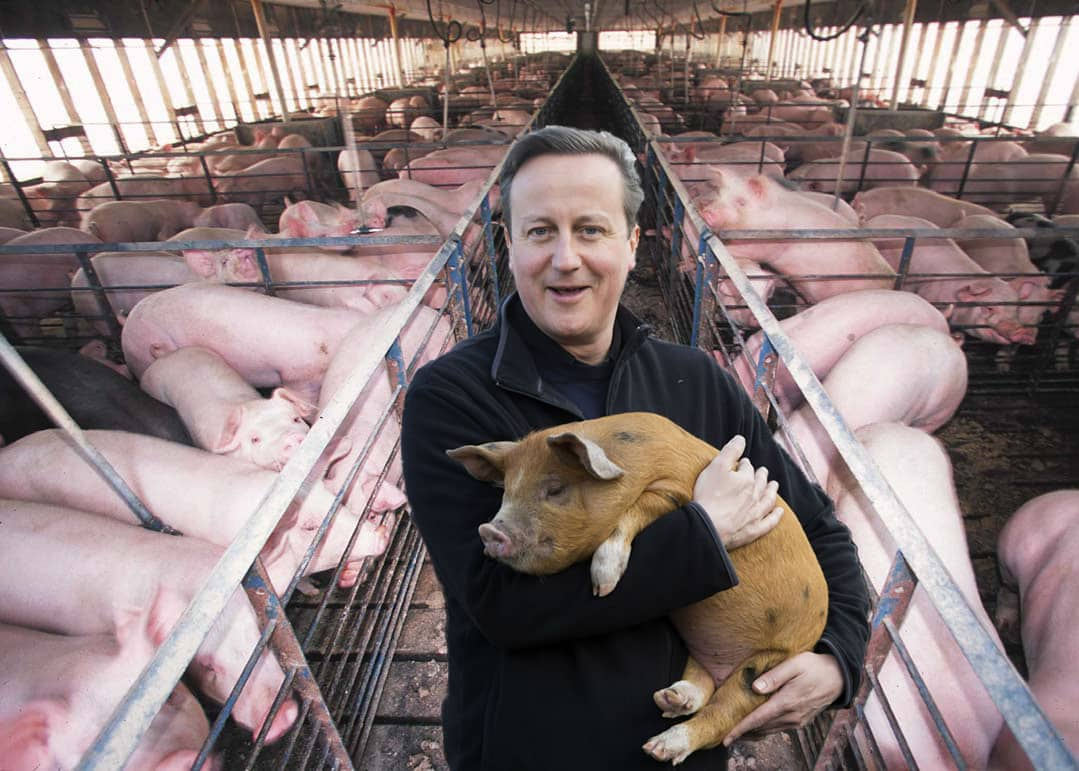 David Cameron on his new Suffolk pig farm