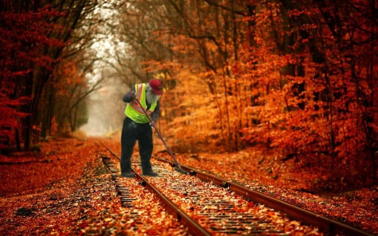 Leaves on the line