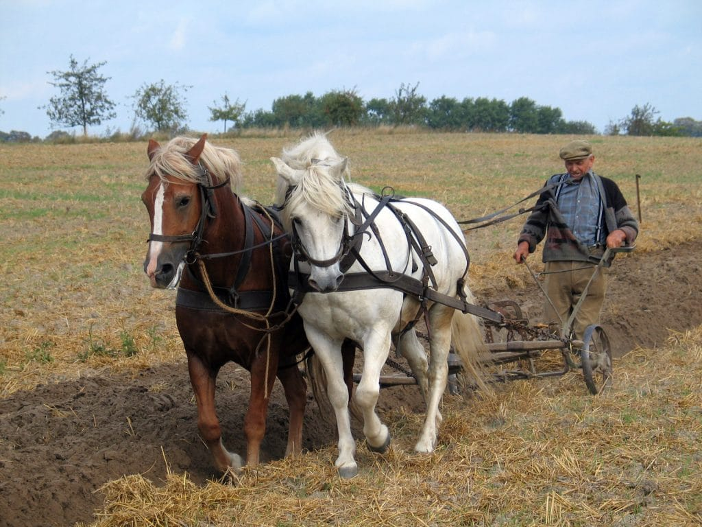 Newfangled plough tested in Norfolk
