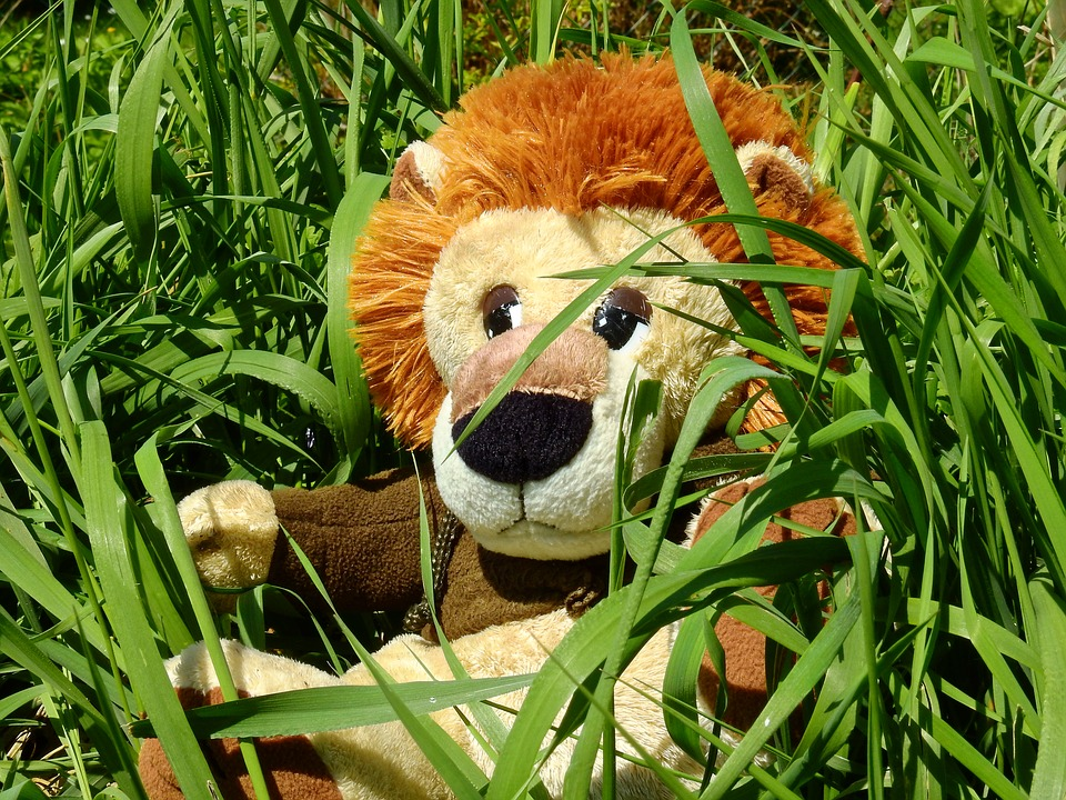 Police look for lion on the loose in Suffolk