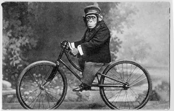 Norfolk cyclist