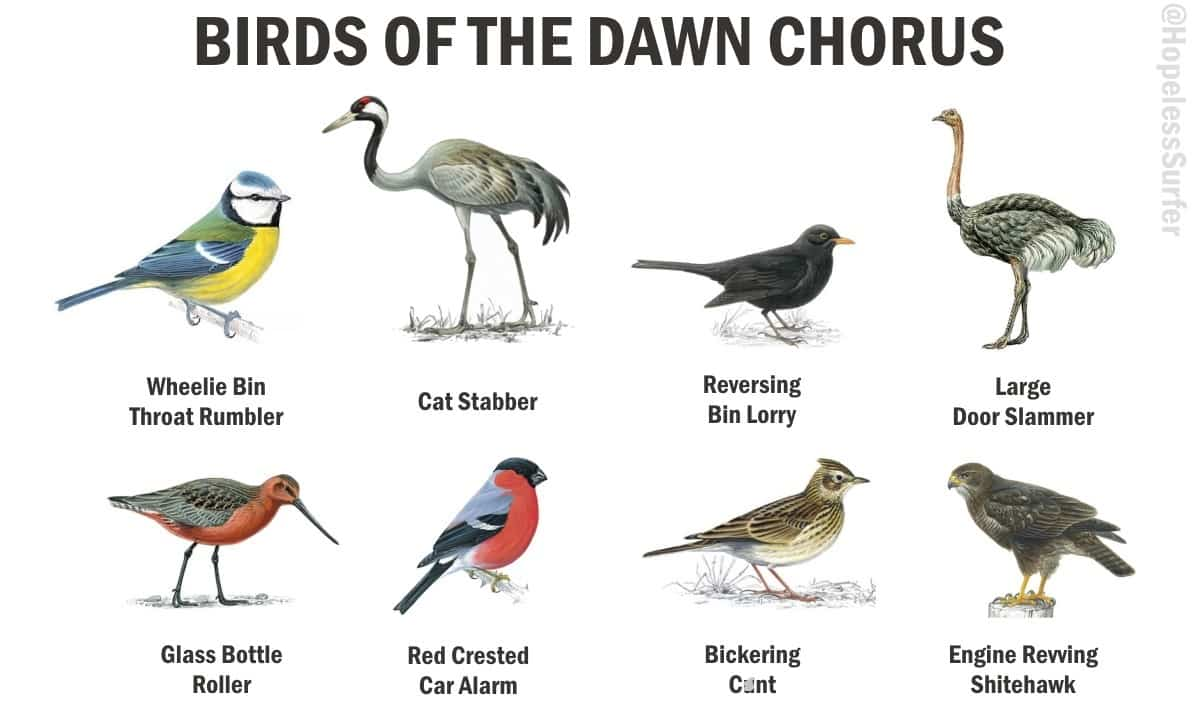 Alternative dawn chorus