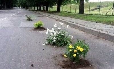 Bedding plants in potholes