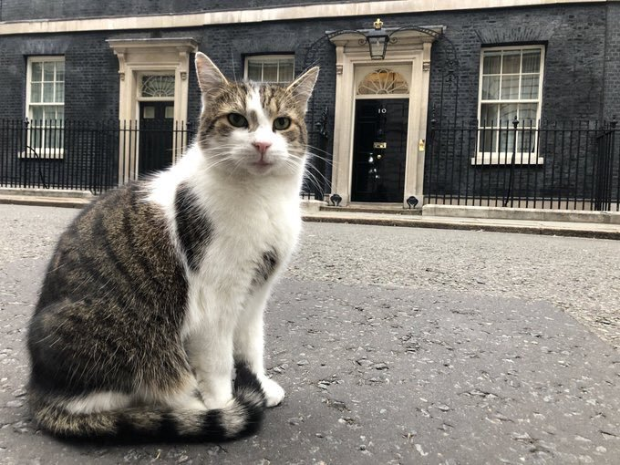 I'm in charge now, says Larry the Downing Street cat